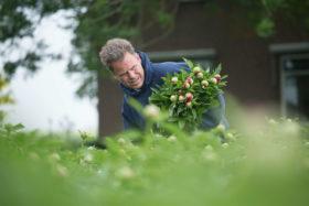 Alex Karsten harvesting Red Charm peonies