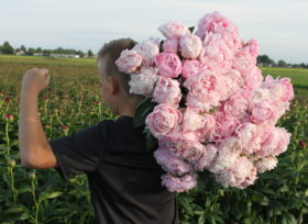 Big pink peonies at Rolin Flowers