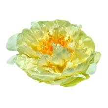 Thumbnail of paeoniae Lemon Chiffon - Single becomes double