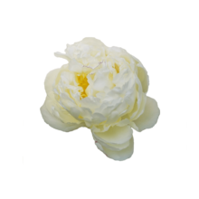 Thumbnail of paeoniae Mary E. Nicholls - Enorme bloemen