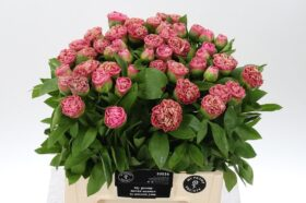 Paeonia Carnation Bouqet