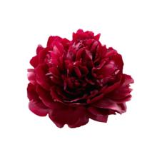 Thumbnail of paeoniae Red Sarah Bernhardt - Verraderlijke naam
