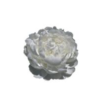 Thumbnail of paeoniae White Ivory -