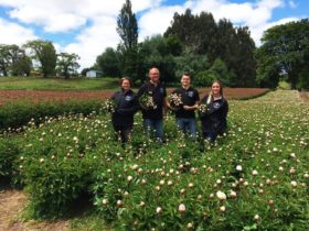 Marcel Wories and family on their Chilean peony farm