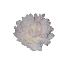 Thumbnail of paeoniae Puffed Cotton - Bloem uit het gouden uur